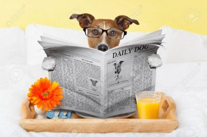 29302497-having-breakfast-in-bed-and-reading-the-morning-news-1080x719